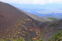 静岡県 富士山 宝永第二火口底の草紅葉