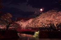 山形県 松が岬公園の桜