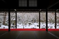 京都府 圓光寺 本堂から見る雪降る十牛之庭