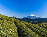 静岡県 茶畑と富士山