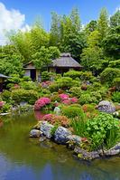 京都府 等持院 庭園