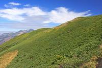 福井県 別山のハイマツと白山遠望左奥