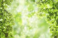 木漏れ日と新緑