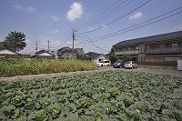 """キーワード:""""近郊農業 を全て含む"""" 広告・商品化向け写真ならアフロ ..."""