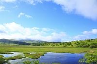 長野県 新緑の八島ヶ原湿原