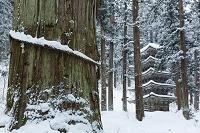 山形県 雪の爺杉と五重塔