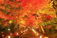 京都府 ライトアップの宝厳院