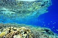 インドネシア サンゴ礁