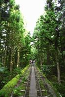 鹿児島県 縄文杉への登山道