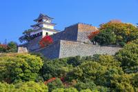 香川県 紅葉と石垣と丸亀城天守閣