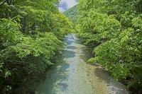 栃木県 日光市 上三依水生植物園 男鹿川