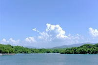 和泉市 緑茂る貯水池と入道雲