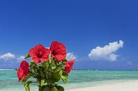 鹿児島県 ハイビスカスと海と青空
