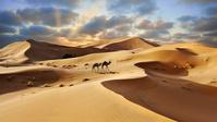 モロッコ 夕暮れのシェビ砂丘 ラクダ