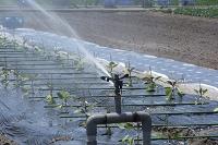 野菜 露地栽培の散水