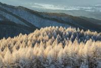 長野県 朝の霧氷林