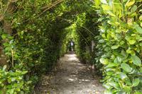 鹿児島県 国直 フクギ並木