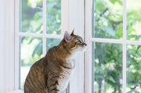 窓辺から遠くを見るペットの猫