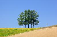 北海道 上富良野町 五本の木