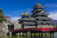 長野県 桜と松本城