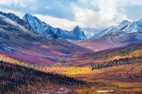 カナダ 山岳ツンドラ地帯の紅葉