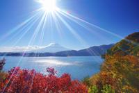 山梨県 富士河口湖町 モミジと富士山と河口湖と太陽の光