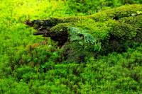 苔に覆われた森と倒木
