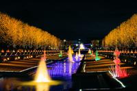 東京都 昭和記念公園のクリスマスイルミネーション