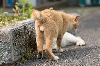 猫のかわいいふぐり
