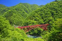 日本 富山県 新緑の黒部峡谷鉄道 新山彦橋