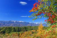 長野県 ナンテンと中央アルプス