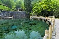 鹿児島県 丸池湧水