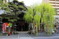 京都府 頂法寺 新緑のしだれ柳と本堂(六角堂)
