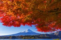 山梨県 富士山と河口湖畔の紅葉