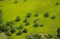 アメリカ合衆国 カウアイ島 木
