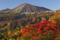 福島県 吾妻小富士の紅葉