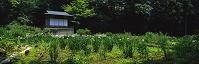 神奈川県 浄徳院菖蒲園