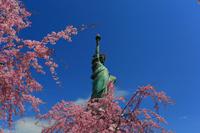 東京都 お台場の桜と自由の女神