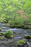 青森県 初夏の奥入瀬渓流三乱の流れ