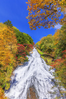日本 栃木県 紅葉の湯滝 奥日光