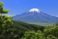 山梨県 二十曲峠から望む残雪, 富士山と新緑の木々