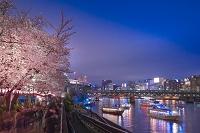 東京都 隅田公園 夜桜