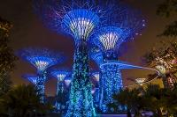 シンガポール ライトアップされたスーパーツリー