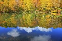 長野県 鎌池と黄葉のブナ林