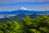 静岡県 葛城山の新緑と駿河湾と富士山