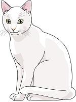 猫 日本猫 白