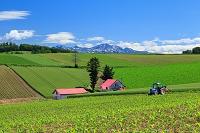 北海道 美瑛町 赤い屋根の家と旭岳