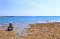 大潮の不如帰の石碑