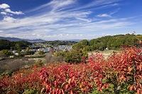 奈良県 明日香村
