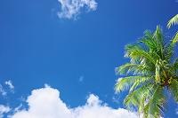 グアム ヤシの木と青空